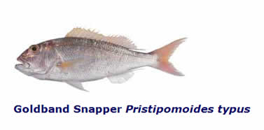 how to cook goldband snapper