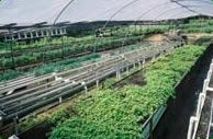 The Village Herbs