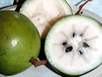 Star Apple Fruit Price