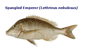 spangled emperor