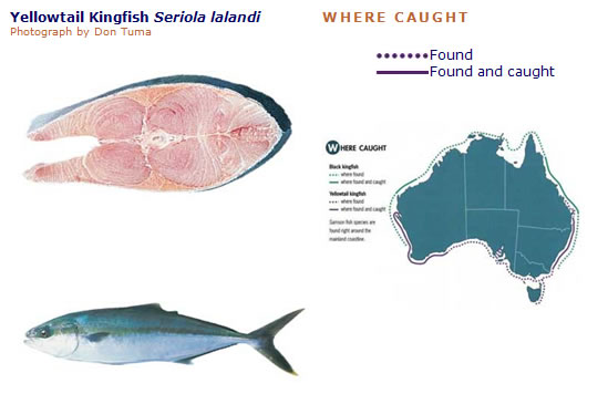 Australian Tropical Foods » Yellowtail kingfish