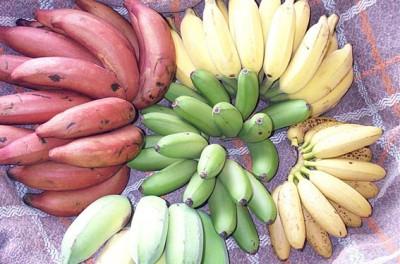banana-variety