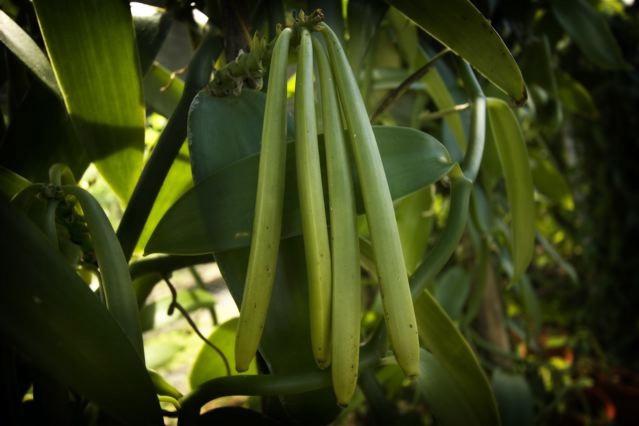 green-beans_0